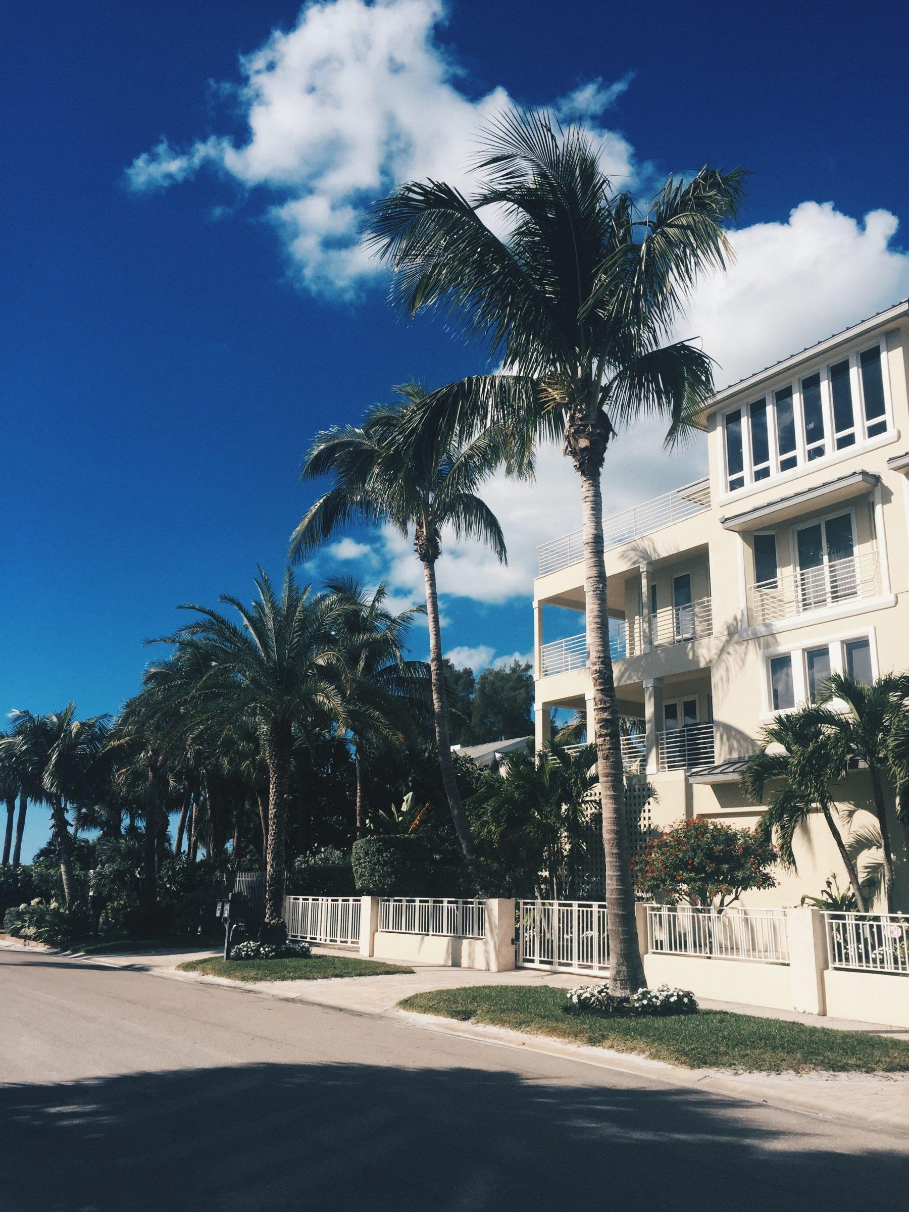 palmtrees_florida_sarasota