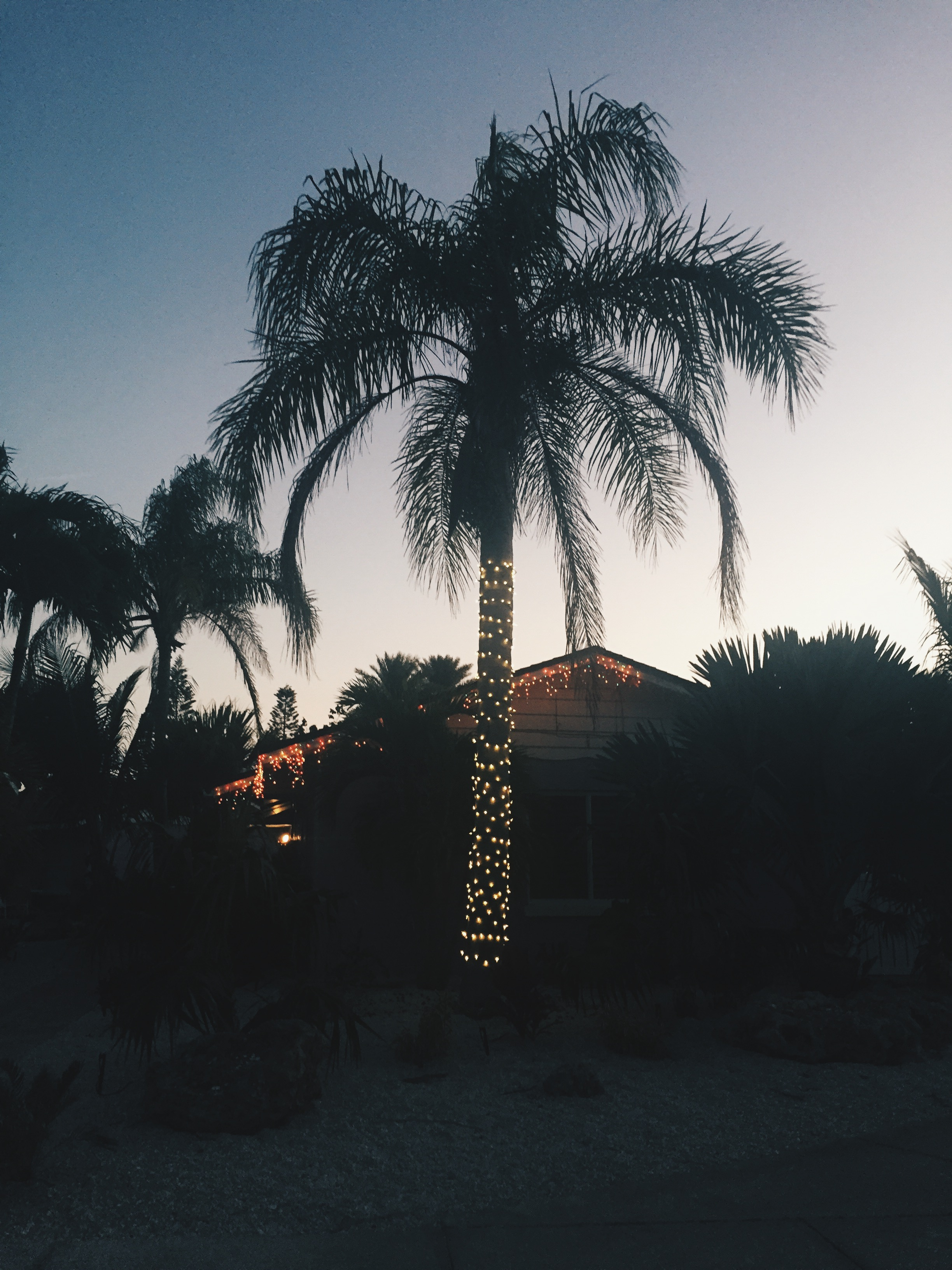 palmtrees_christmas_lights
